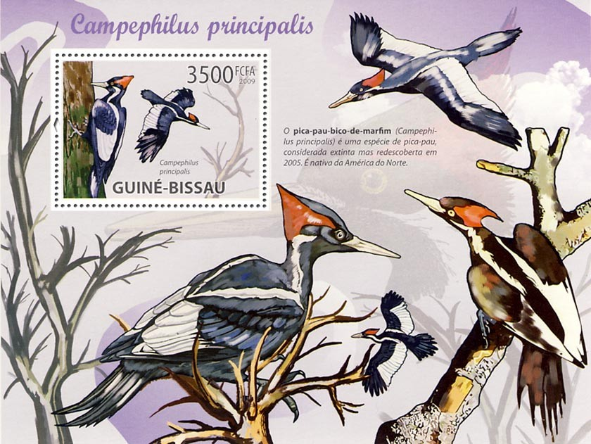 Woodpeckers - Issue of Guinée-Bissau postage stamps