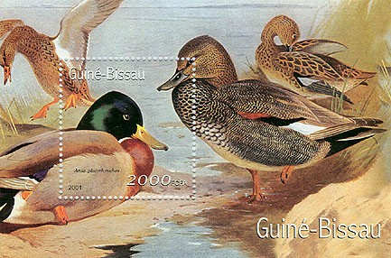 Canards - Duck 2000 FCFA S/S - Issue of Guinée-Bissau postage stamps